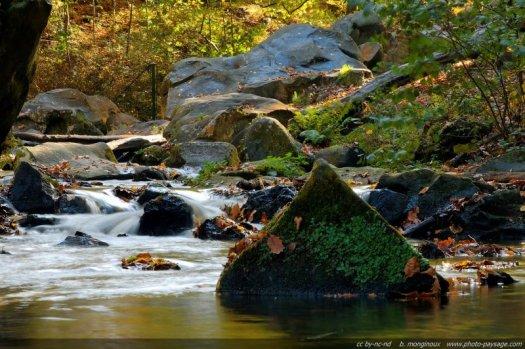 Un ruisseau en automne : le Ru de Vaux