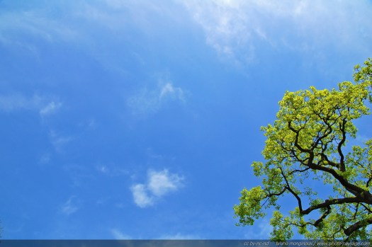 Les arbres dans le paysages - photo de la cime d'un chêne