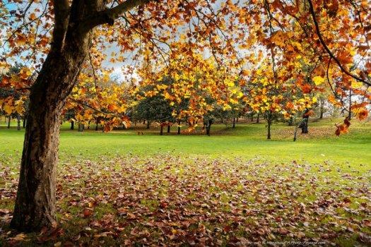 A l'ombre d'un platane paré d'un magnifique feuillage d'automne jaune-orangé