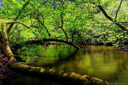 En remontant le courant d'Huchet, on finit par se retrouver face à une mini forêt amazonienne, avec des arbres qui poussent au-dessus ou même en plein milieu du cours d'eau.