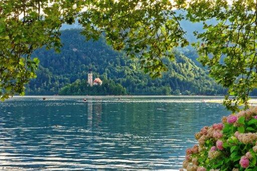 Des fleurs au bord du lac de Bled . En arrière plan, l'église néogothique du XV siècle située sur l'île de Bled et les Alpes juliennes. Slovénie.