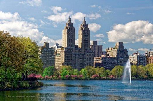 Des cerisiers en fleurs longent le grand réservoir situé au centre de Central Park (Jacqueline Kennedy Onassis reservoir).