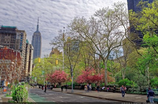 Le printemps se retrouve aussi dans les rues de New-York, comme ici sur la 5° avenue, le long du Madison Square Park. En arrière plan, le sommet de l'Empire State building.