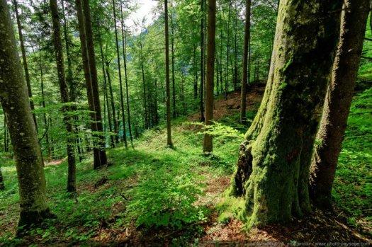 Paysage forestier photographié à Schwangau en Bavière allemande.