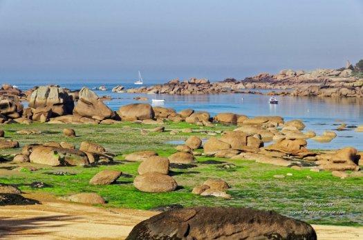 Algues et rochers à marée basse sur la Côte de Granit Rose, dans les Côtes d'Armor (Bretagne)