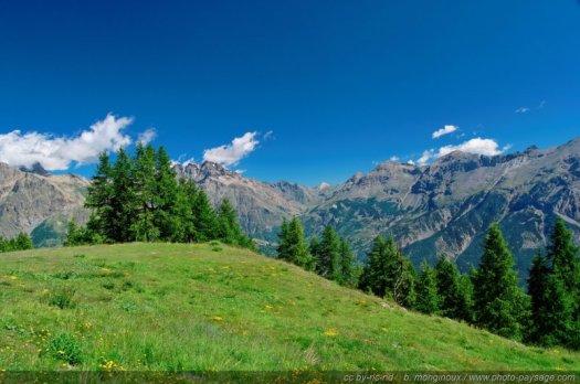 Prairie en haute montagne