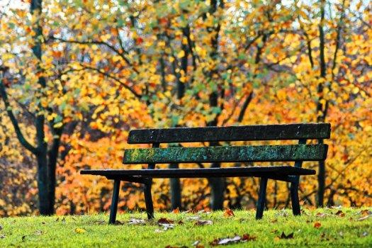 Un vieux banc en bois, humide et recouvert de lichens, photographié un matin d'automne