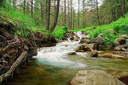 Ruisseau-de-montagne-dans-le-mercantour---2.jpg