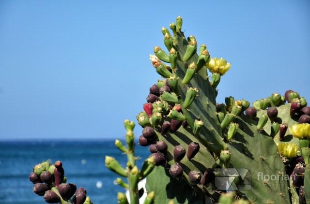 Klimat Malty odpowiedni dla dzieci - Wielkie podróże małych odkrywców
