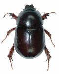 خنافس 2019 من الحشرات الزاحفة
