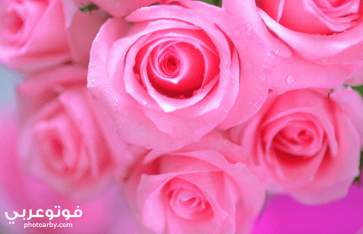 فوتو عربي اجمل صور خلفيات واتس اب جديدة 2020
