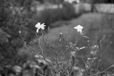2015-12-26 Photowalk 50mm 26