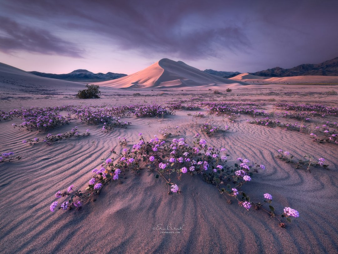 Creative Applications of Color Theory in Landscape Photography