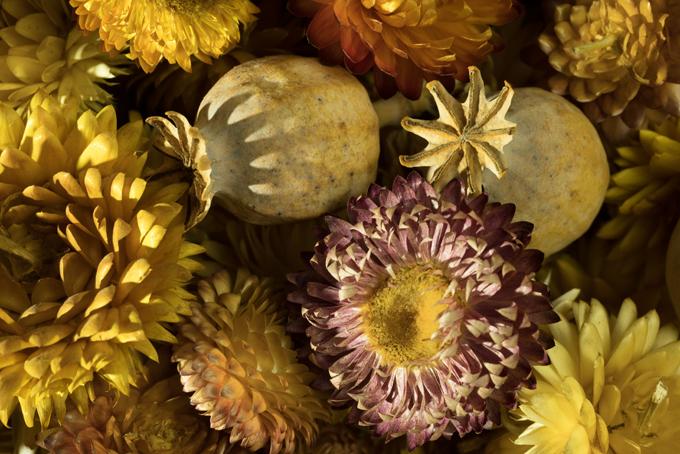 driedflowers-A7RII-web