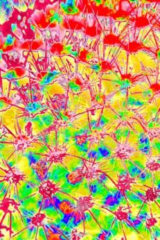 fibonacci-0071-version-2-small
