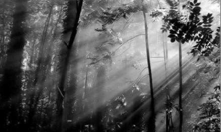 La vie en gris : 200 photographes, 1000 photos, 3000 commentaires, 1 ou 2 soucis…