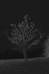 baum 3 - PHOTOGALERIE WIESBADEN - dunkel-schwarz