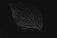 blatt 1 - PHOTOGALERIE WIESBADEN - dunkel-schwarz