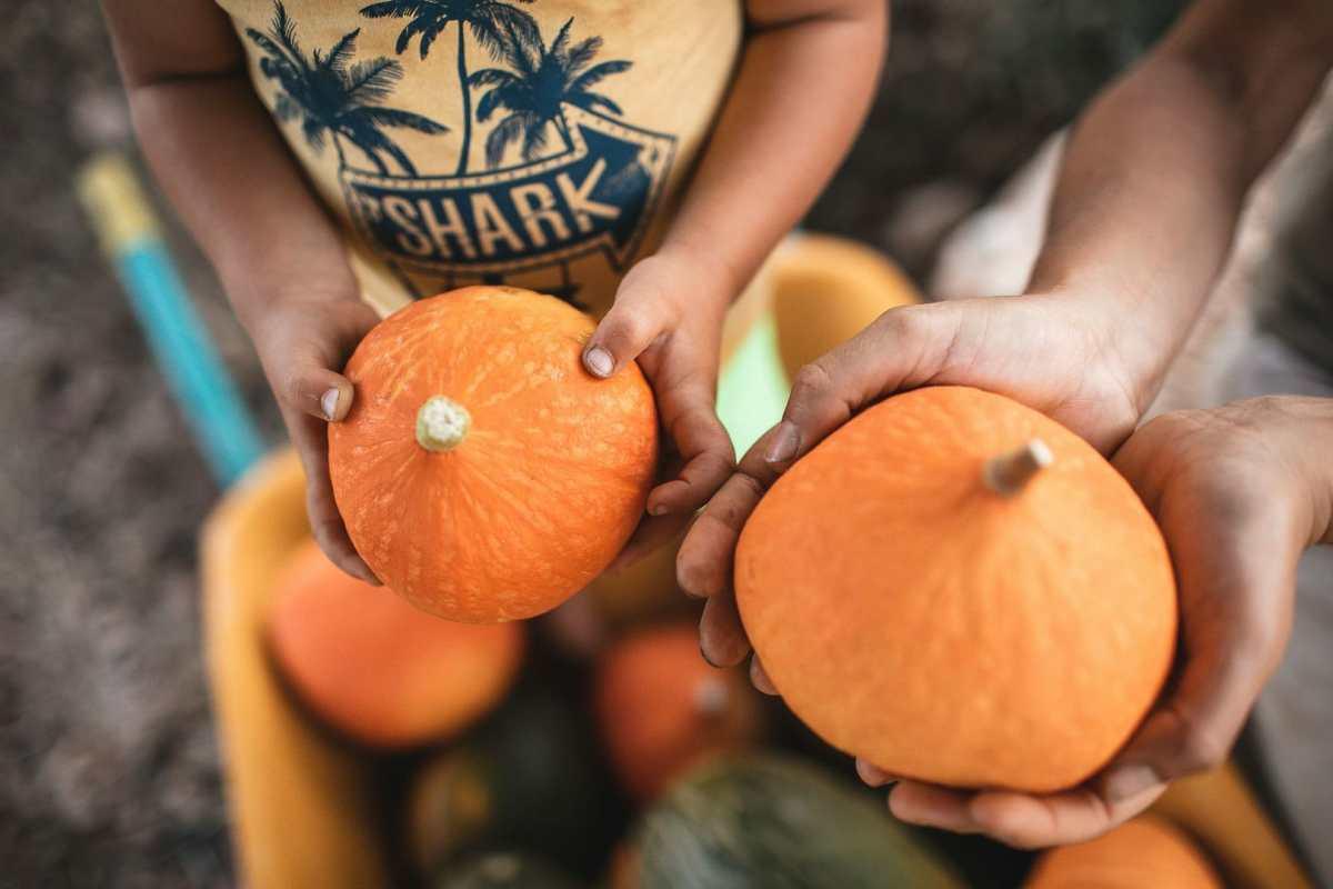 Detalle fotográfico de unas manos sosteniendo una calabaza junto a una carretilla con verduras recién recolectadas