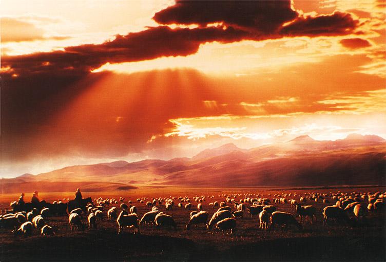 sunset grasslands