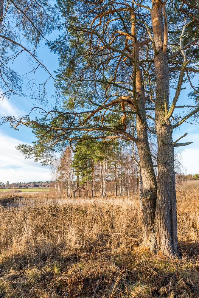 tall_tree_cabin