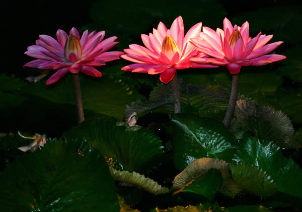 https://i2.wp.com/www.photographyblog.com/images/photo_of_the_week/16220505/Water%20Lily%20Shadows.jpg