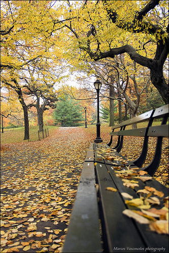 bench fall by Marcos Vasconcelos