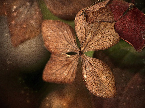 winter, hydrangea, flower, Waiting for Spring