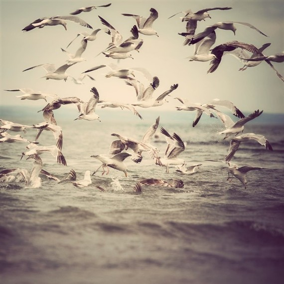 Image result for seagulls photography
