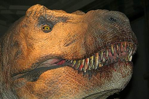 Tyrannosaurus Rex - taken for my son who loves dinosaurs