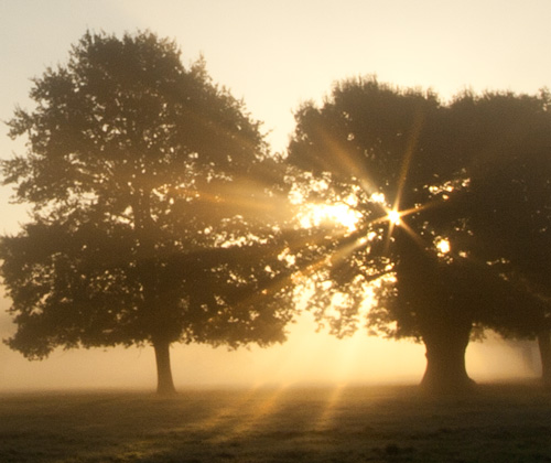 Golden Morning - Light shafts pierce the mist
