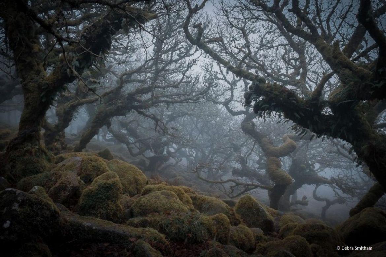 10 Witsmans Woods_Dartmoor_Debra Smitham