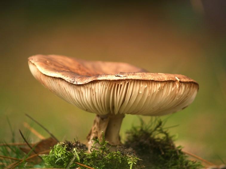 Beautiful toadstool