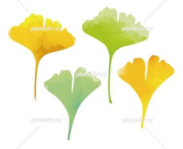 「イチョウの葉 イラスト」の画像検索結果