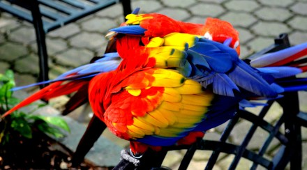 Color Ball With Feathers by Weston Wishart