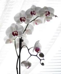 Orchid Love by Debra Pruskowski