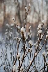 A Delicacy of Winter's Beauty by Liz Sette