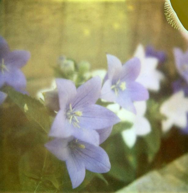 1307-flowers001