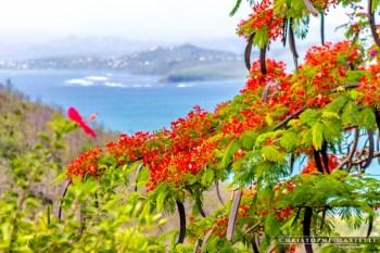 Martinique_019-christophe-Mastelli-photographe-marseille.jpg