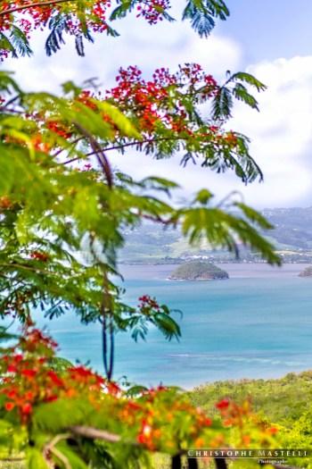 Martinique_022-christophe-Mastelli-photographe-marseille.jpg