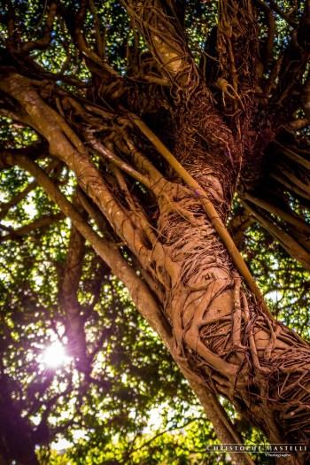 christophe-mastelli-photographe-058.jpg
