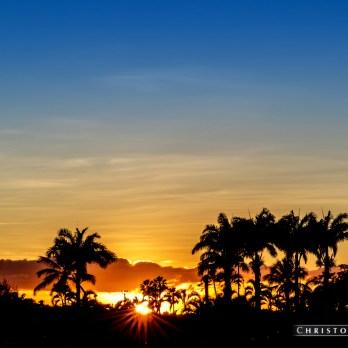 Sun Palm