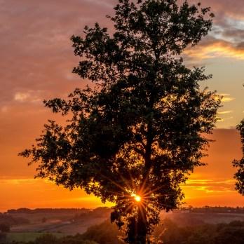 Sun of the Tree