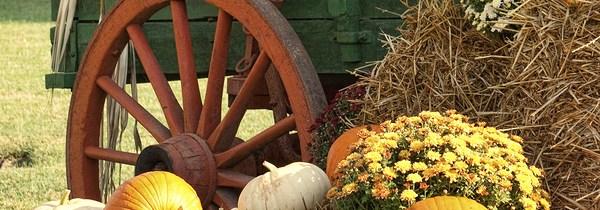 8 Autumn Photography Tips