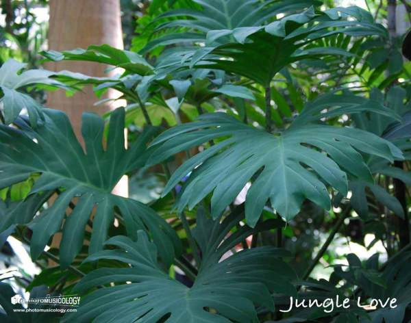 jungle-love-journal-cover