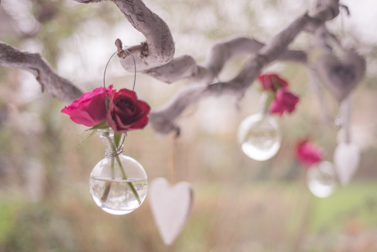 Pink flowers hanging in a tree