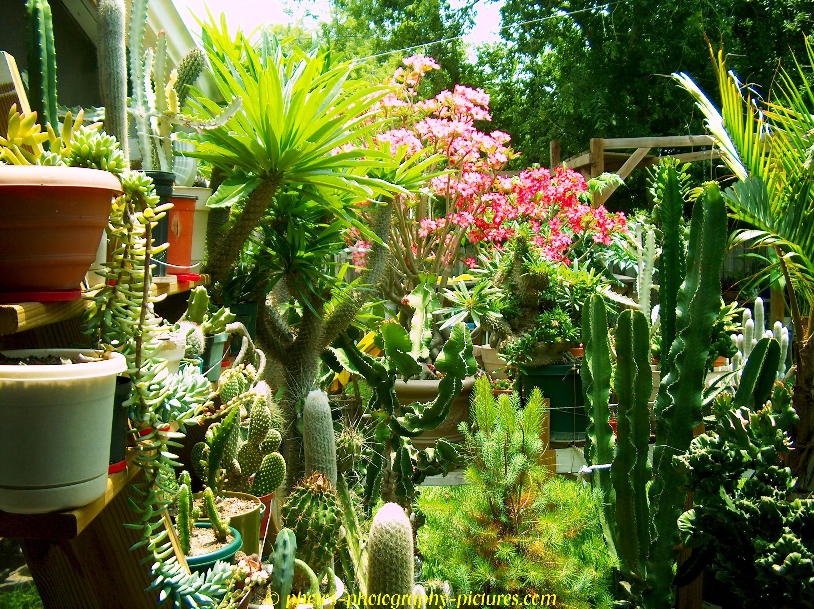 potted plants houseplants jungle plants 1