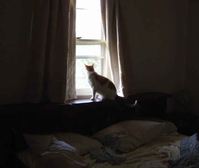 Cat In Bedroom Window
