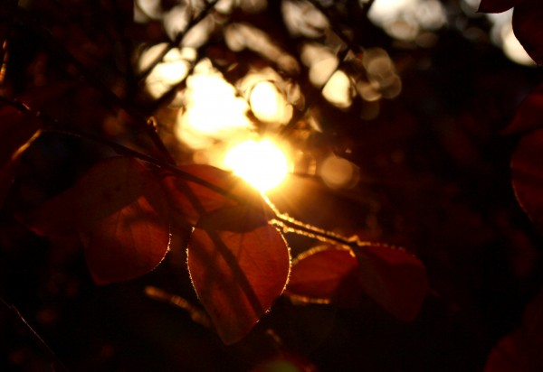 Artistic Backlit Autumn Leaves - Free High Resolution Photo