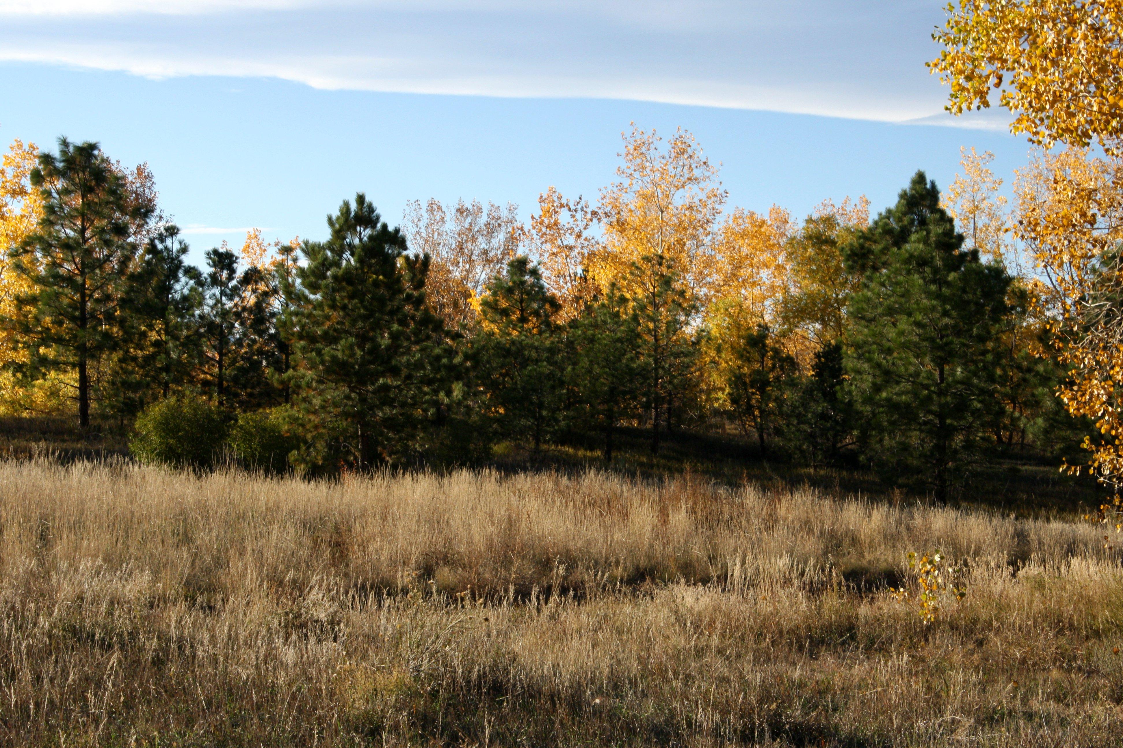 Autumn Meadow Picture Free Photograph Photos Public Domain